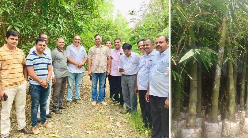 Maharashtra Bamboo Farmer