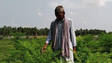 Ram Sanwale Shukla
