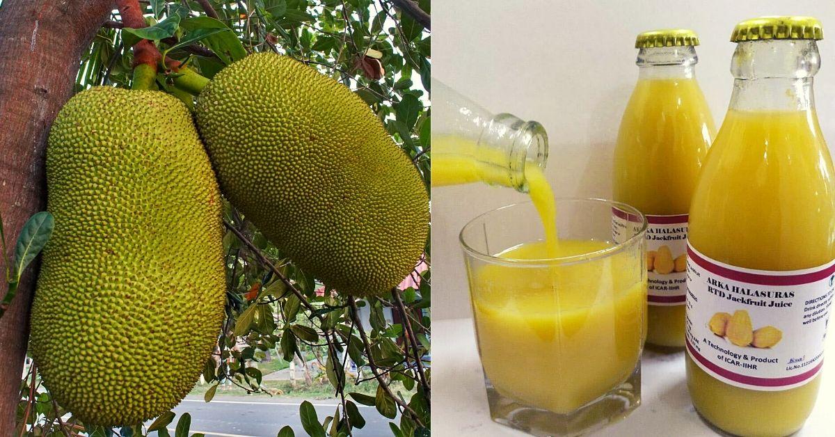 scientists Research Instant Jackfruit Juice