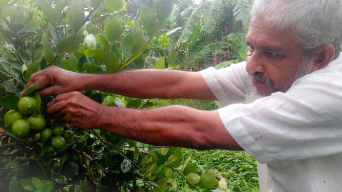 अपने पड़ोसियों के प्लांट वेस्ट से इलियास ने अपने खेत को पूरी तरह से ऑर्गनिक इकोसिस्टम में तब्दील कर दिया है।