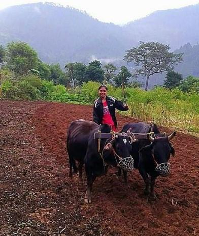 uttarakhand girl farming