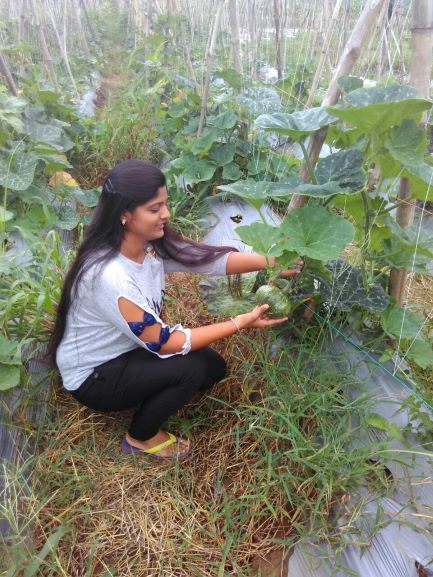 assistant professor farmer