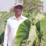 Mp farmer Arbi farming