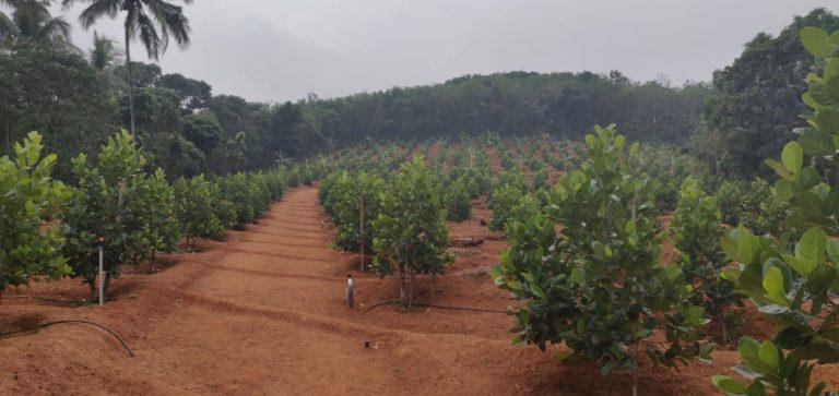 kerala farmer