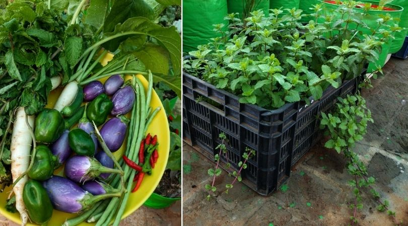 IT Marketer Growing Vegetables