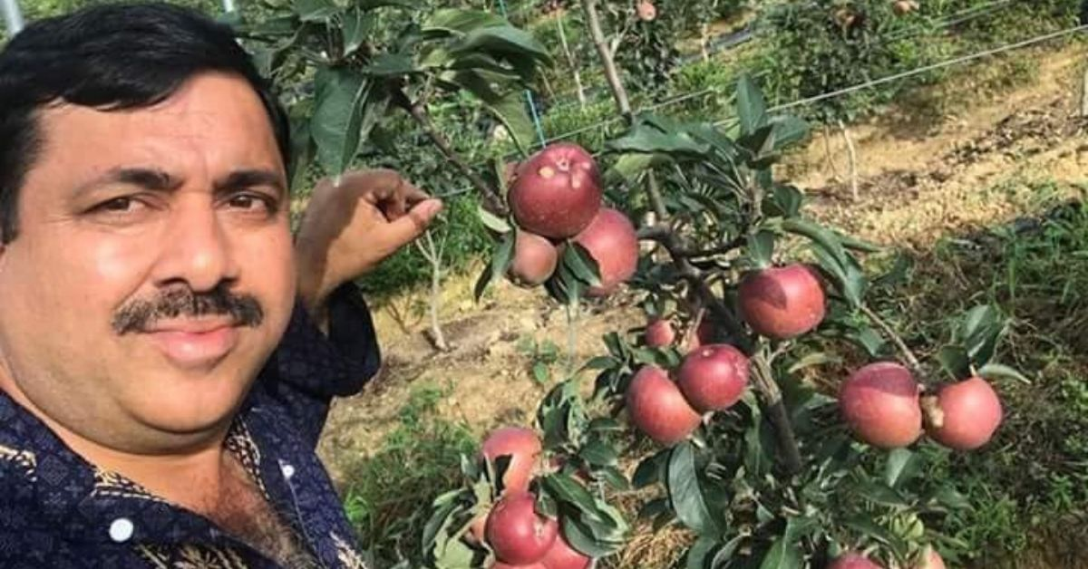 apple farming