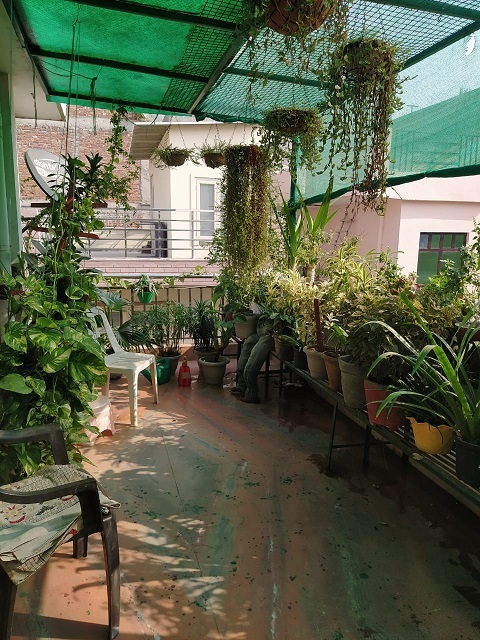 Terrace Gardening in Gurgaon