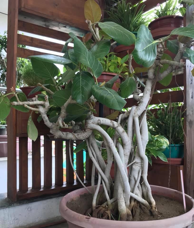 Bonsai garden House In Jaipur