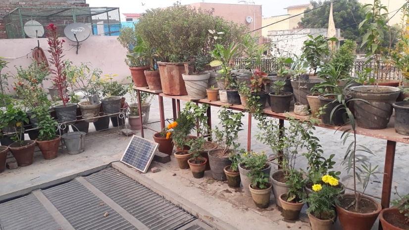 terrace gardening in delhi